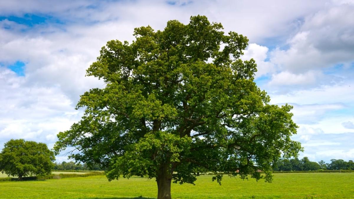 come-parlano-alberi-significato-simbolico-1